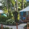 Campground BC