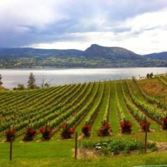 Vineyards on the Naramata Bench