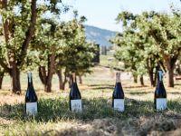 La Petite Abeille Ciders in orchard